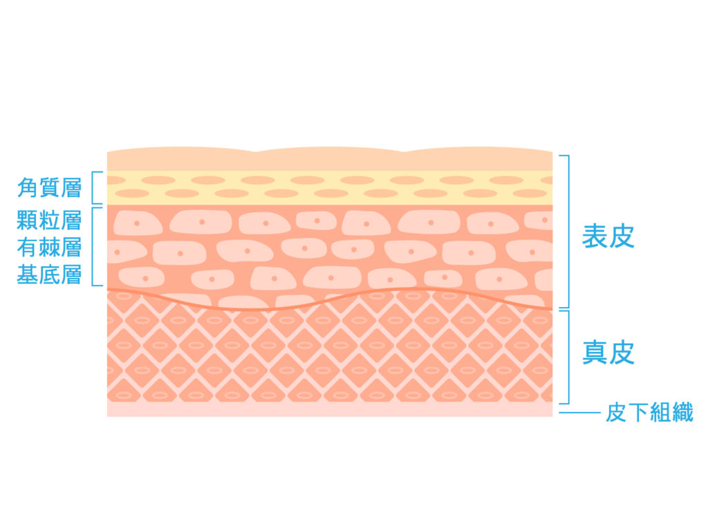 美容鍼は千葉の鎌取・おゆみ野にある鍼灸サロン Komachi 皮膚